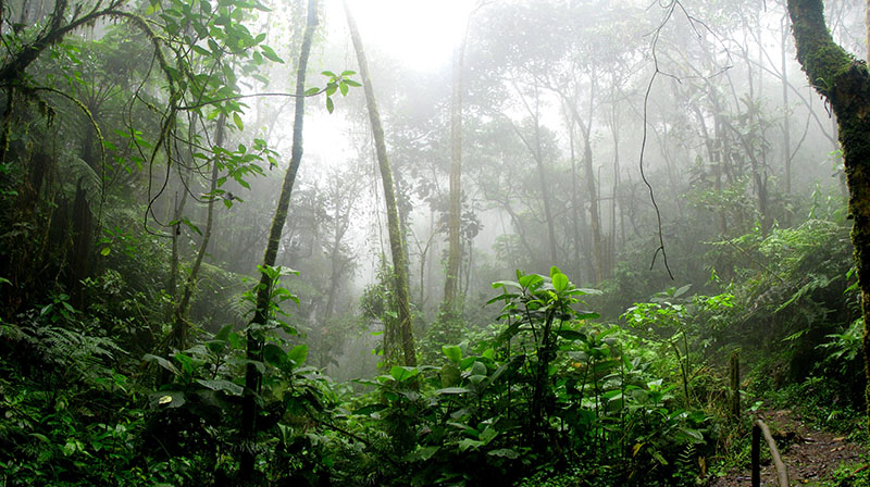 Jungles of the Amazon